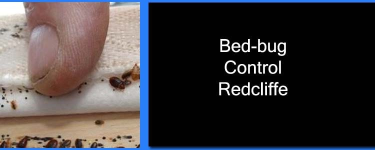 Bed Bug Control Redcliffe