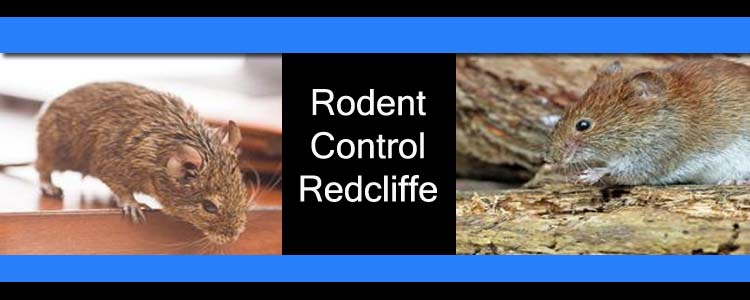 Rodent Control Redcliffe